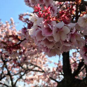 ふあり 京都のエステ-春休みのお知らせ